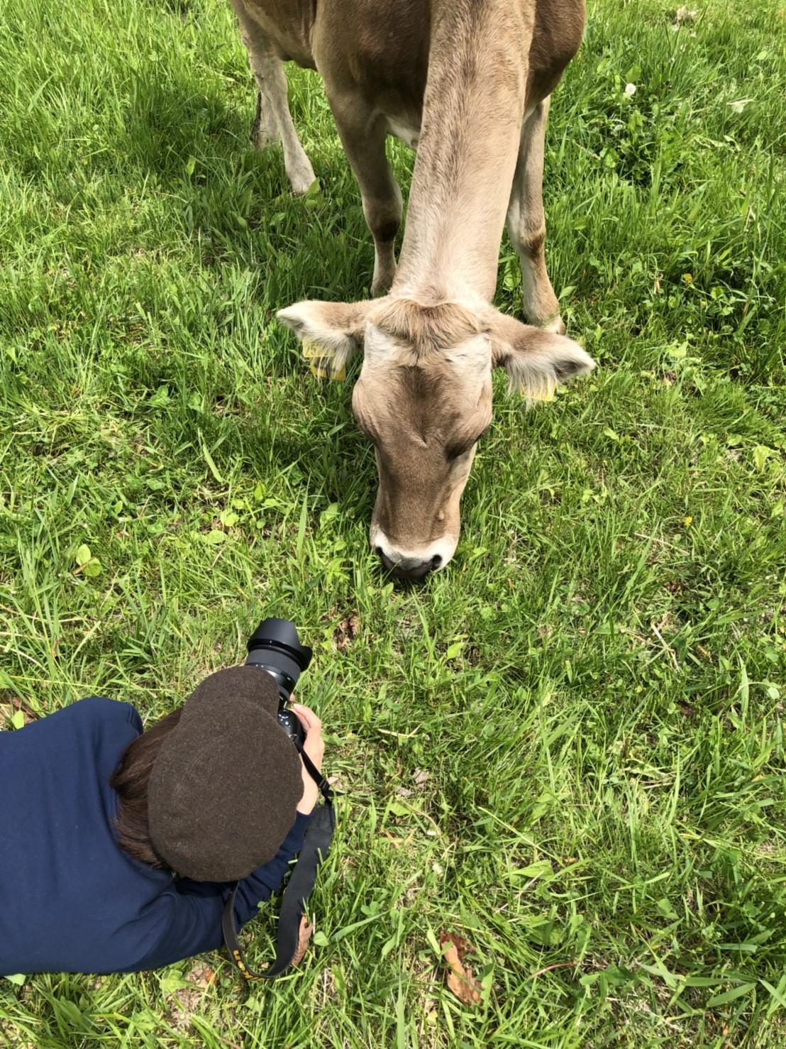 北海道で牧場をやりたい人にオススメ|牛さんの撮影 in 北海道足寄町