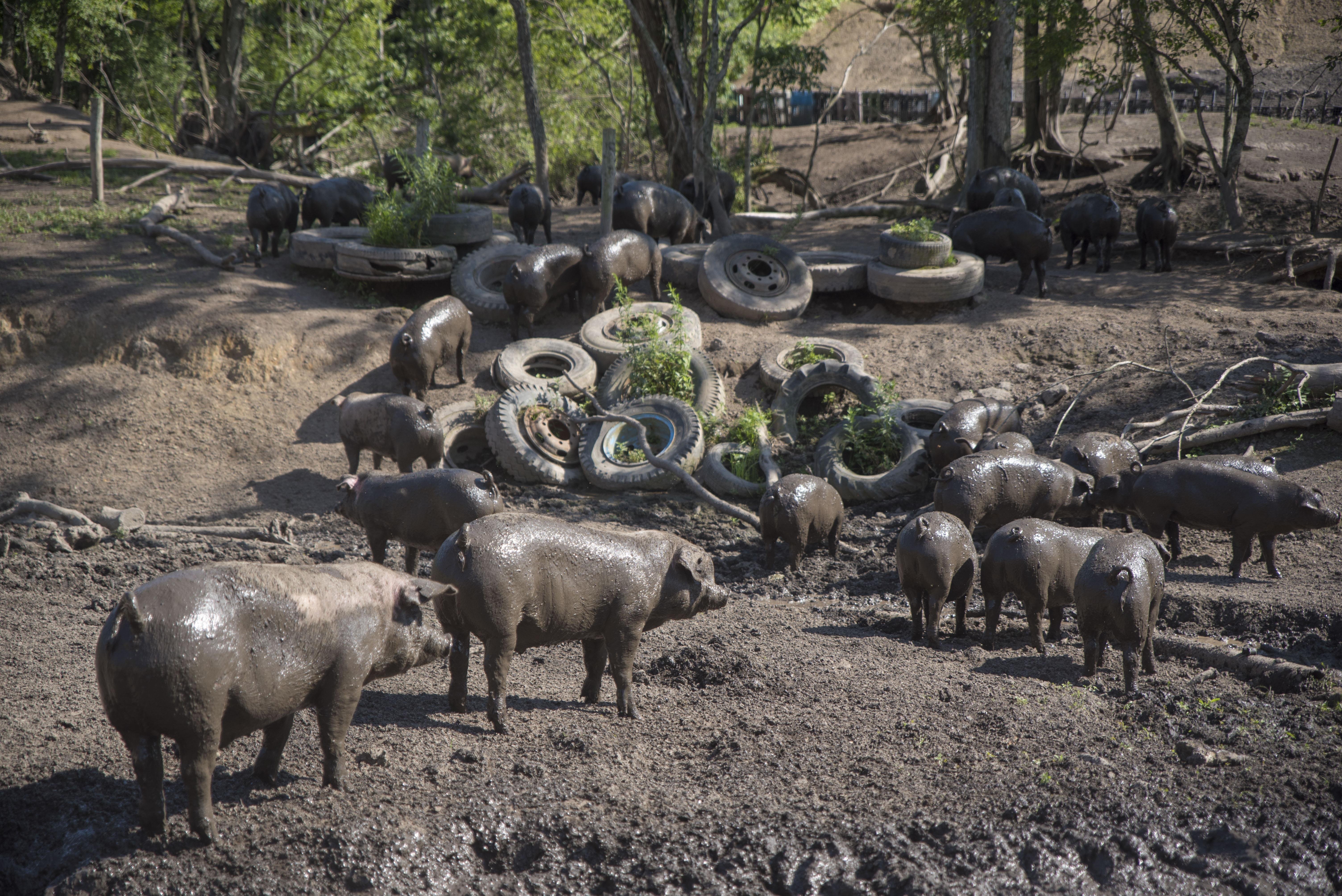 あかっぷる、どろまみれになる|日本一周農家旅 エルパソ豚牧場 in 北海道帯広