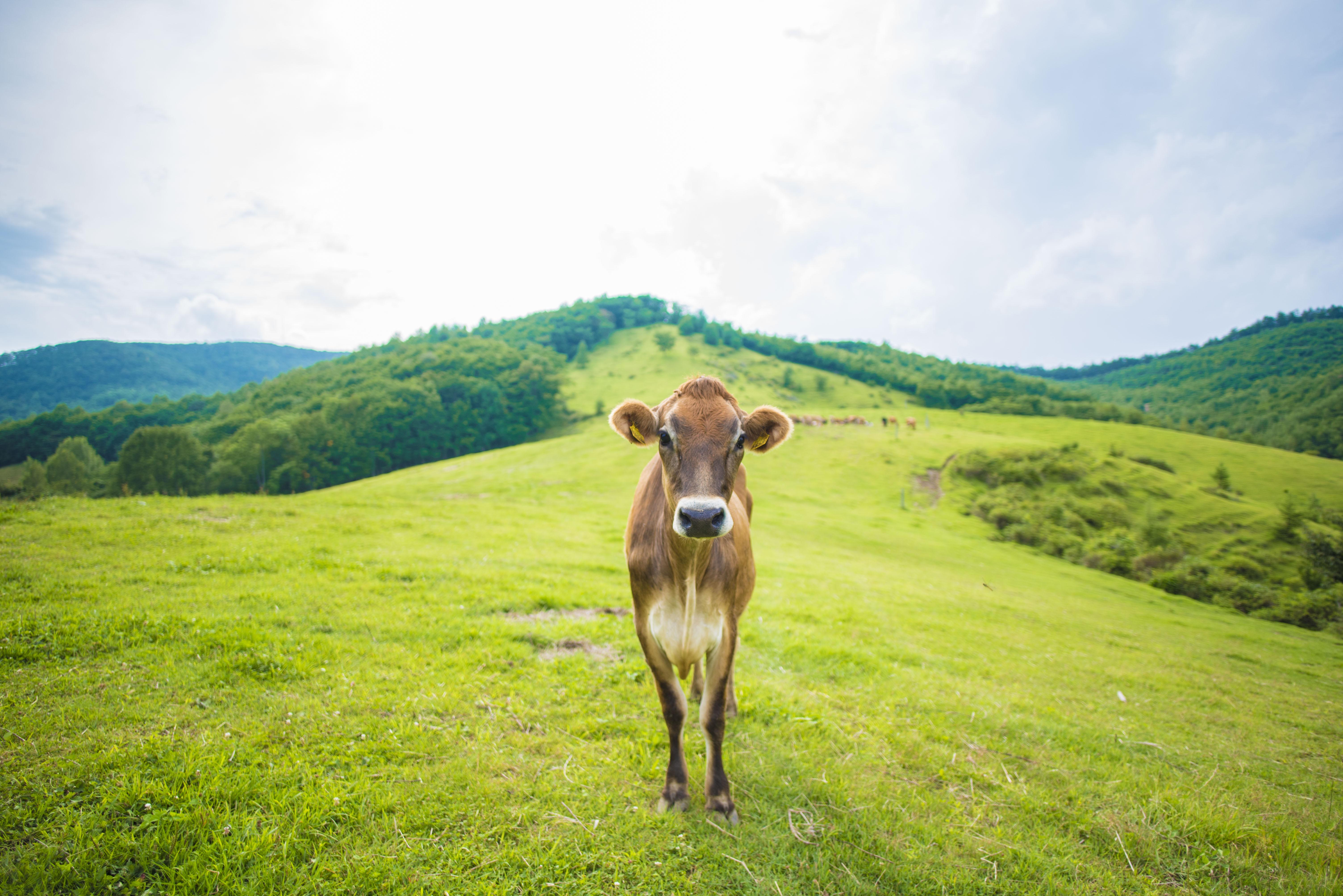 マツコも絶賛「グラスフェッドバター」|日本一周農家旅 なかほら牧場 in 岩手県岩泉