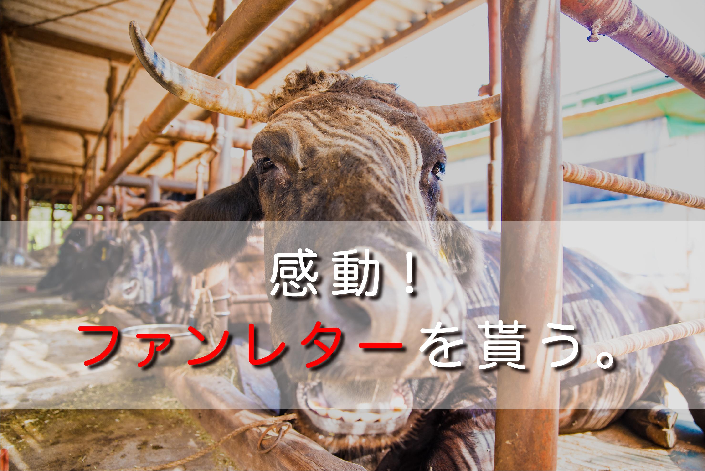感動。初めてのファンレターをもらう。|日本一周農家旅 山﨑牧場 in 静岡県掛川