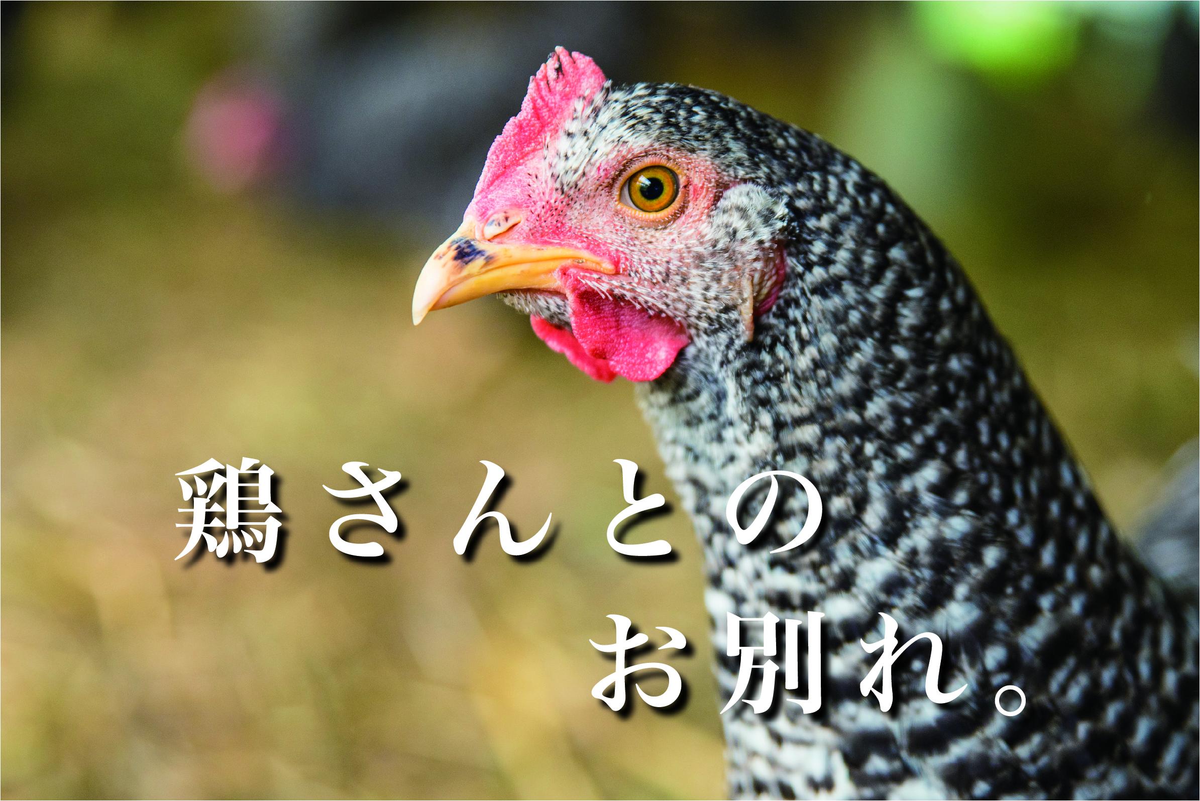 【閲覧注意】大人の食育体験をしてきた。〜鶏の屠殺〜|日本一周農家旅 大野村農園 in 福島県相馬