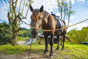 馬写真、動物写真