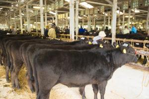 家畜市場写真