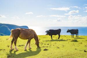 牛写真、馬写真