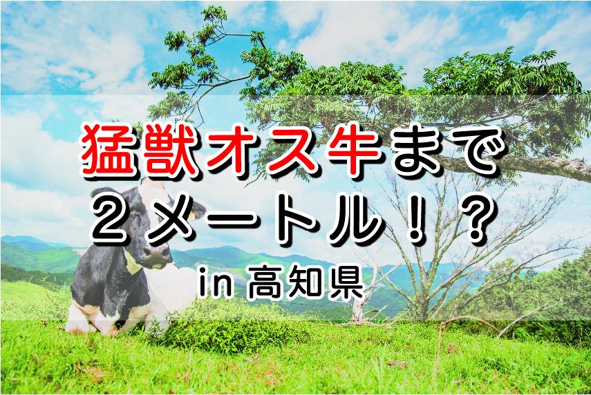 放し飼い「猛獣オス牛」との距離2メートル!?|日本一周農家旅 斉藤牧場 in 高知県南国市