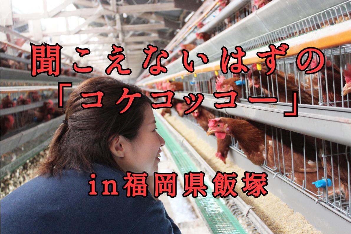 聞こえないはずの「コケコッコー」が聞こえる・・・|日本一周農家旅 大村ファーム in 福岡県飯塚