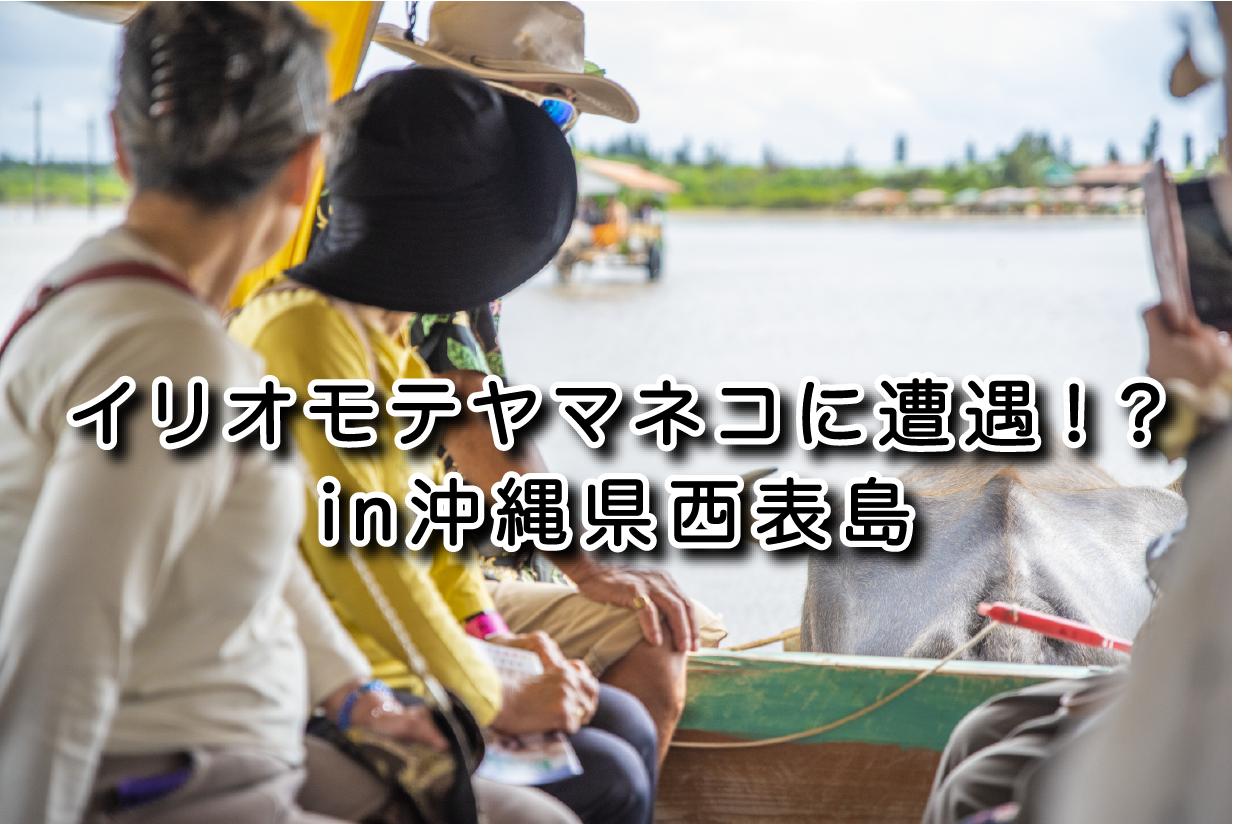 島に80匹のイリオモテヤマネコを目撃!?|日本一周農家旅 由布島 in 沖縄県西表島