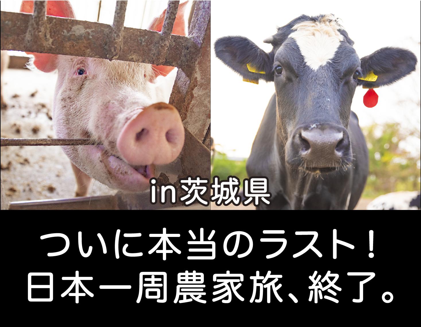 本当のラスト。日本一周農家旅終了。|日本一周農家旅 鹿熊養豚&上野牧場 in 茨城県稲敷