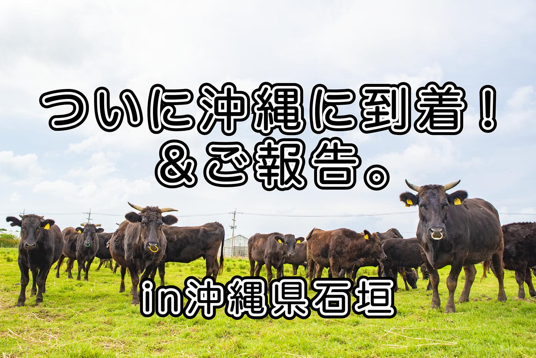 ついに沖縄県に上陸!!&ご報告。|日本一周農家旅 比屋根牧場 in 沖縄県石垣島