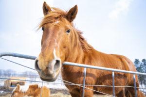 馬写真 動物写真