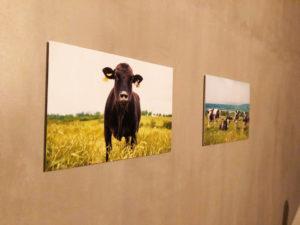 燦燦 家畜写真家