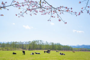 遅い春がやってきた in 北海道広尾町「上野牧場」